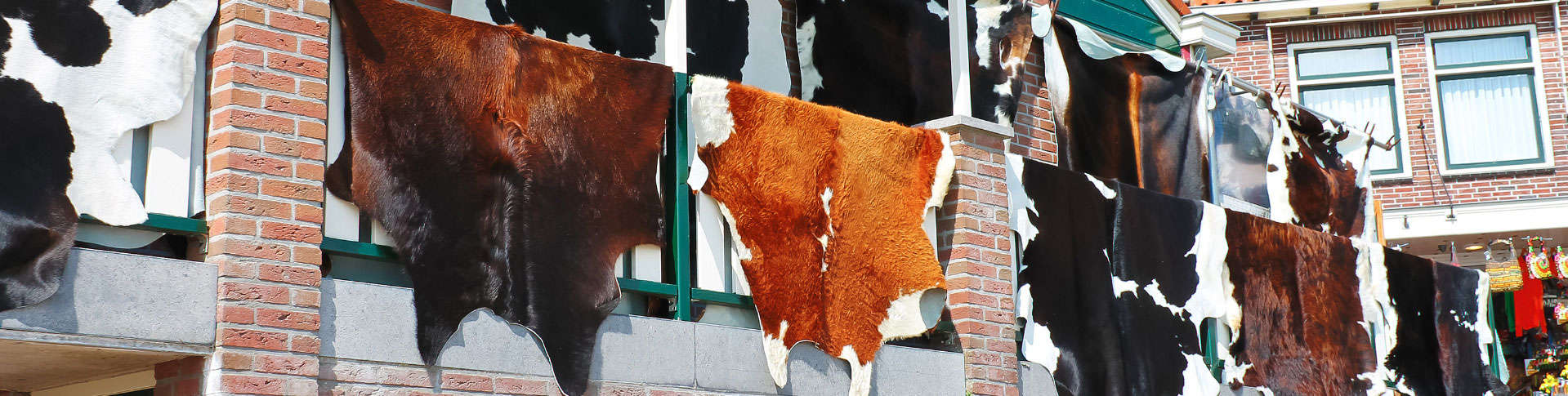 Cowhide Rug Pickup and Delivery