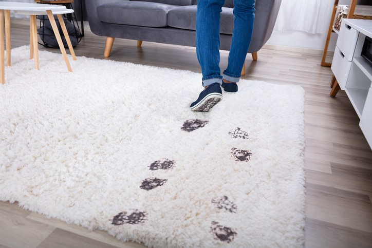 area rug stain