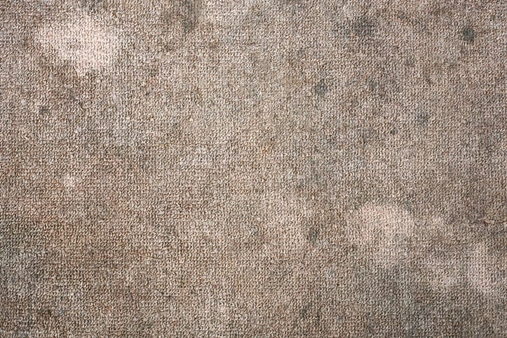 How To Remove Mildew Smell Out Of Your Rugs
